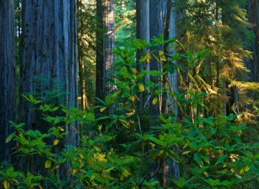 Forest along wild river corridor